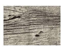 modern carpet texture. Modern Carpet CEDAR Silk Avenue 2018 Texture