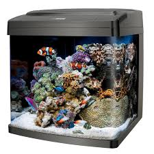 Labyrinth Fish Tank Best Fish Tanks 2017 The Top 5 Choices For Fishkeepers