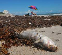 Tests confirm red tide in Brevard County