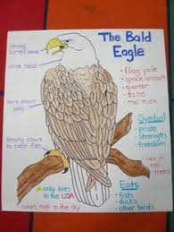 Bald Eagle Age Chart Anchor Charts On American Symbols Google Search American