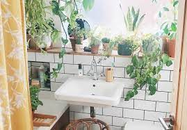 A Guide To The Best Plants For Your Bathroom Collective Gen