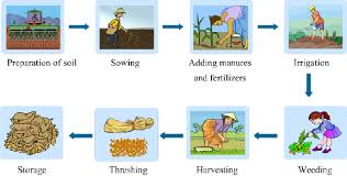 Flow Chart On Various Steps Of Crop Production Science