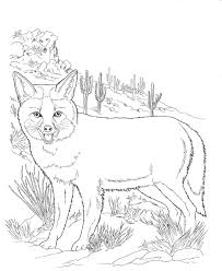 nocturnal animals coloring pages. Brilliant Coloring Coloring Pages Of Night Animals New Nocturnal Throughout G