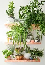 5. dispaying houseplants (4)