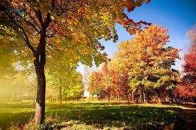 Színes őszi erdő