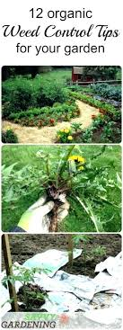 weed safe for vegetable garden homemade
