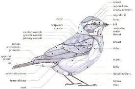 Identification Fat Birder