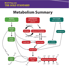 mcat biochemistry review summary gold standard mcat prep biochemistry macromolecules summary iv metabolism