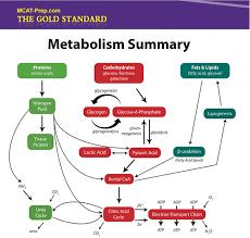 biochemistry macromolecules summary iv metabolism