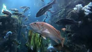 oregon coast aquarium in newport oregon