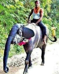 <b>Фестиваль слонов</b> в <b>Индии</b> | Клуб путешественников