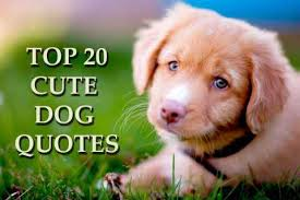 Cute Dog Quotes For Instagram Stunning Cute Dog Quotes For Instagram Archives MILLIONAIRE DOG