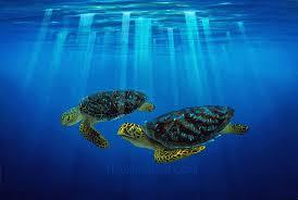 hawaii sea turtles paintings myrtle and bert