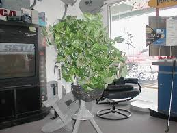 Camouflage Dishes Satellitebush Bush Or Shrub Cover