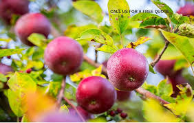 Fruit Tree Pruning Instructions Basic U0026 AdvancedPrune Fruit Tree