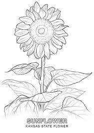 Small Picture Kansas State Flower coloring page Free Printable Coloring Pages