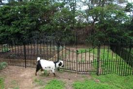 wire fence ideas. Hog Fence Decorative Wire Design Ideas