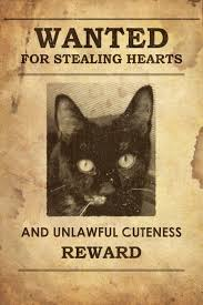 Melissas Mochas Mysteries And Meows Caturday Art Wanted Poster