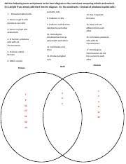 Venn Diagram Comparing Meiosis And Mitosis Chapter 5 Homework Docx Add The Following Terms And