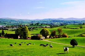 Image result for farm picture ireland