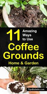 11 ways to use coffee grounds in the garden including as fertilizer and for pest control