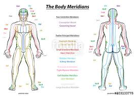 Meridian System Chart Male Body With Principal And