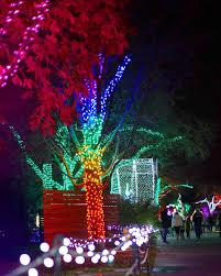Festival Of Lights Seattle