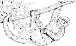 Small Picture Free Monkey Coloring Pages