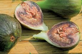 Billedresultat for middelhavs figentræ