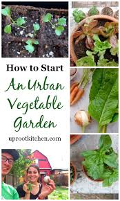 Kitchen Gardening Tips 17 Best Images About Garden Love On Pinterest How To Freeze Okra
