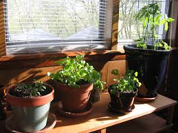 indoor-garden. The most important thing is adequate amount of light. Plants  need light in order to create their own food naturally through  photosynthesis, ...