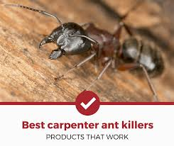 best carpenter ant s
