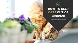 how to keep cats out of garden protect