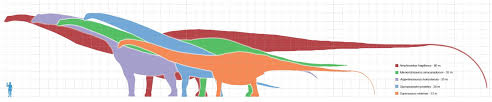 Dinosaur Weight Chart Biggest Dinosaur Ever Maybe Maybe Not