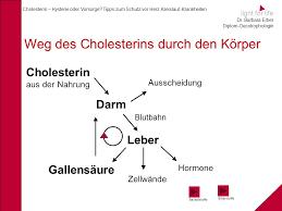 leber und cholesterin