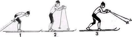 Реферат Лыжи com Банк рефератов сочинений докладов  В основном варианте хода после окончания одновременного отталкивания палками лыжник перейдя к свободному скольжению на двух лыжах разгибает туловище и