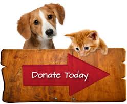 animal shelter donate. Plain Donate Donate_animalpng For Animal Shelter Donate O