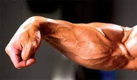 forearm size forearm size