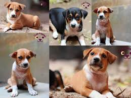 cute puppies wallpaper collection 1