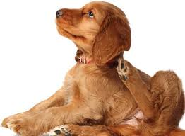 The latest advancements in atopic dermatitis treatments in dogs and ...