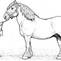 Clydesdale Horse Coloring Pages To Print Coloring Pages For