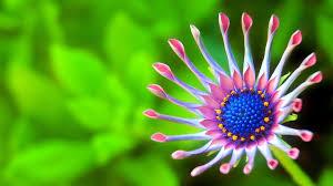3840x2160 wallpaper beautiful flower green background macro 4k hd flowers