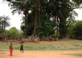 Image result for biombo guinea bissau