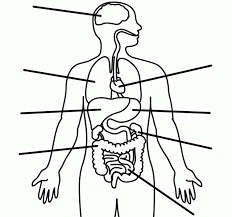 Small Picture Human body coloring page human body coloring pages to download and