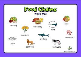 Year 4 Science Animals Including Humans The Food Chain Word