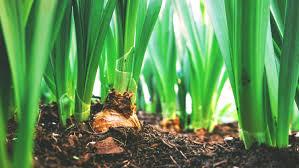 prevent farmland soil erosion