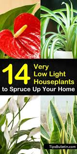Extremely Low Light Plants 14 Very Low Light Houseplants To Spruce Up Your Home Low