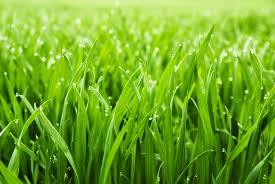 grass. Wonderful Grass On Grass