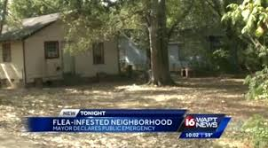 flea infestation yard. Fleas In Yard Are Infesting A Canton Neighborhood And Now City Officials Spraying . Flea Infestation