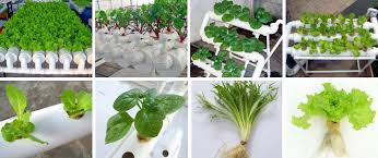 a growing number of greenhouses are switching to hydroponic gardening this method is also optimal for growing plants at home let s investigate how you can